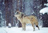 WOV 09 TL0035 01