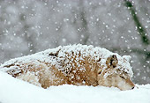 WOV 09 TL0036 01