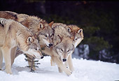 WOV 09 TL0038 01