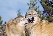 WOV 09 TL0039 01