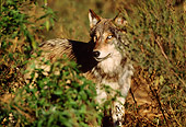 WOV 09 TL0042 01