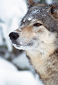 WOV 10 MC0001 01