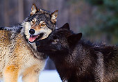 WOV 11 RK0010 01