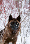 WOV 11 DB0001 01