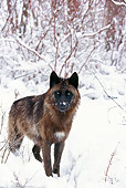 WOV 11 DB0003 01