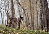 WOV 11 DB0006 01