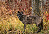 WOV 11 DB0007 01