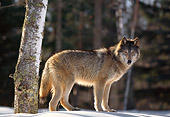 WOV 11 RK0001 07