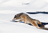 WOV 11 RK0014 05