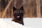 WOV 11 RK0035 01