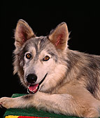 WOV 11 RK0045 11