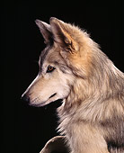 WOV 11 RK0045 16