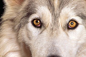 WOV 11 RK0046 21