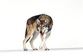 WOV 11 RK0056 54