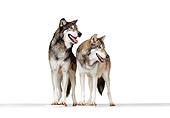 WOV 11 RK0057 27