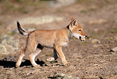 WOV 19 MH0002 01