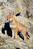WOV 19 MH0003 01