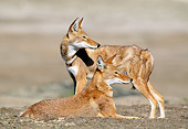 WOV 19 MH0005 01