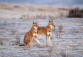 WOV 19 MH0006 01