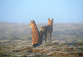WOV 19 MH0007 01