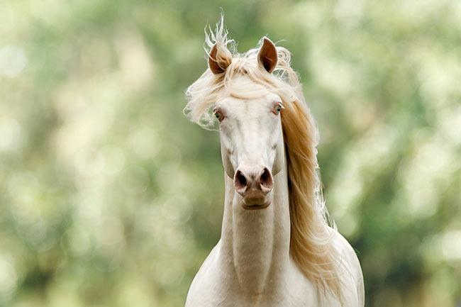 hopping - Animal Stock Photos - Kimballstock