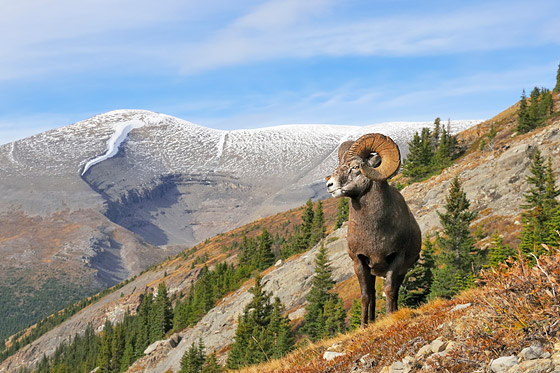 North American Wildlife Stock Images