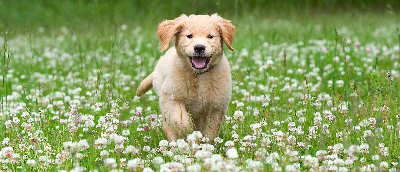 Dog Stock Photos, Images - Kimballstock