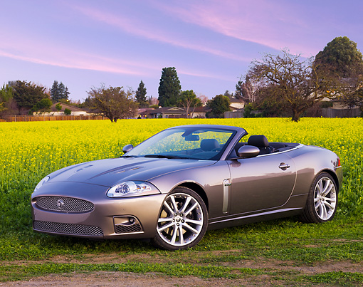 AUT 12 RK0295 01 © Kimball Stock 2009 Jaguar XKR Convertible Gray 3/4 Front View In Field Of Yellow Wildflowers