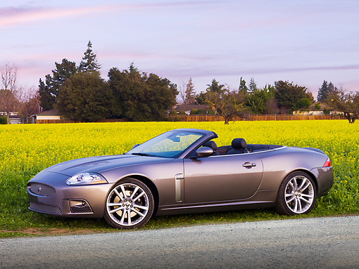 AUT 12 RK0296 01 © Kimball Stock 2009 Jaguar XKR Convertible Gray 3/4 Front View In Field Of Yellow Wildflowers