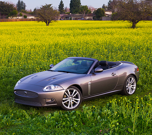 AUT 12 RK0297 01 © Kimball Stock 2009 Jaguar XKR Convertible Gray 3/4 Front View In Field Of Yellow Wildflowers
