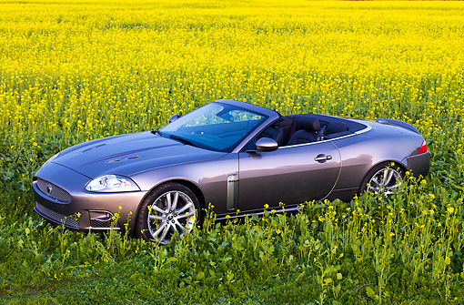 AUT 12 RK0298 01 © Kimball Stock 2009 Jaguar XKR Convertible Gray 3/4 Front View In Field Of Yellow Wildflowers