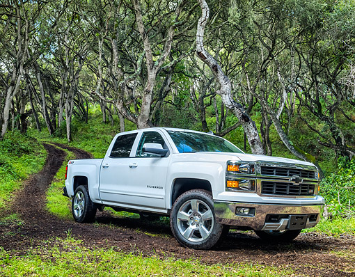 AUT 14 BK0109 01 © Kimball Stock 2015 Chevrolet Silverado 1500 Z71 4WD LTZ Crew Pickup White 3/4 Front View Driving Through Forest