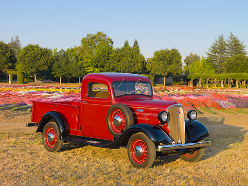 AUT 14 RK1573 01 © Kimball Stock 1936 Chevrolet Pickup Truck Red 3/4 Front View On Dry Grass By Flowers And Trees
