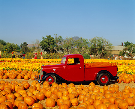 AUT 14 RK0316 03 © Kimball Stock 1935 Ford 1/2 Ton Pickup Truck Red 3/4 Front View At Pumpkin Patch