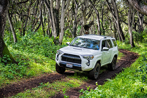 AUT 15 BK0061 01 © Kimball Stock 2015 Toyota Four Runner White 3/4 Front View Driving Through Forest