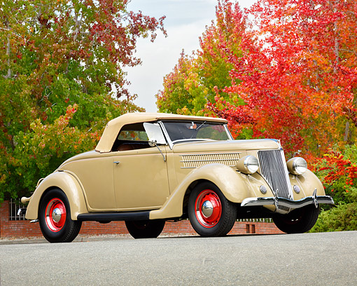 AUT 19 RK1179 01 © Kimball Stock 1936 Ford Roadster Convertible Tan 3/4 Front View By Autumn Trees