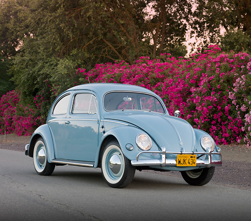 AUT 21 BK0032 01 © Kimball Stock 1957 Volkswagen Beetle Light Blue 3/4 Front View On Pavement By Pink Flowers
