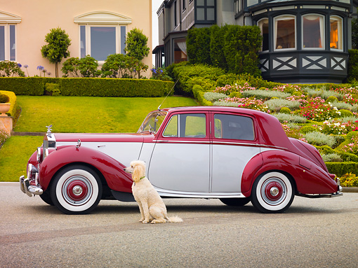 AUT 21 RK2513 01 © Kimball Stock 1954 Rolls-Royce Silver Dawn Silver And Maroon Profile View On Pavement By House And Dog