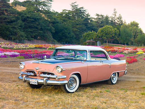 AUT 21 RK2521 01 © Kimball Stock 1955 Dodge Royal Lancer Pink 3/4 Front View On Dry Grass By Flowers And Trees