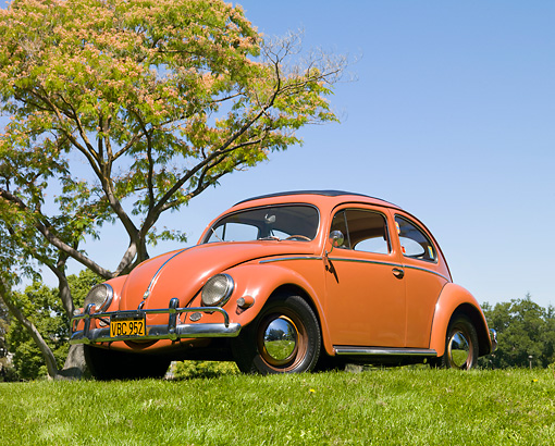 AUT 21 RK2802 01 © Kimball Stock 1956 Volkswagen Beetle Coral Red 3/4 Front View On Grass By Tree