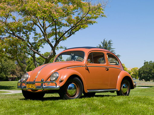 AUT 21 RK2803 01 © Kimball Stock 1956 Volkswagen Beetle Coral Red 3/4 Front View On Grass By Tree