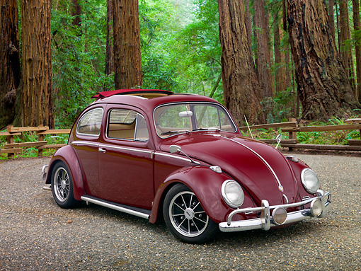 AUT 21 RK2978 01 © Kimball Stock 1959 Volkswagen Beetle Red 3/4 Front View On Gravel By Redwood Trees
