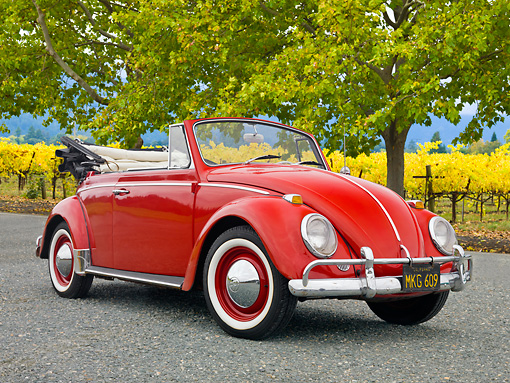 AUT 21 RK2982 01 © Kimball Stock 1957 Volkswagen Bug Convertible Red 3/4 Front View On Gravel By Vineyards
