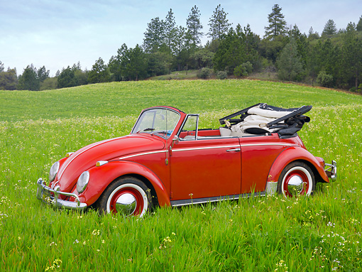AUT 21 RK2985 01 © Kimball Stock 1957 Volkswagen Bug Convertible Red 3/4 Front View On Grass