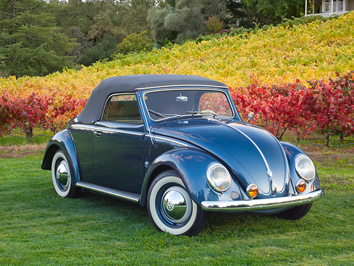 AUT 21 RK3196 01 © Kimball Stock 1953 Volkswagen Hebmuller Black 3/4 Front View On Grass By Vineyard