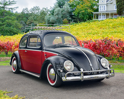 AUT 21 RK3647 01 © Kimball Stock 1957 Volkswagen Beetle Fender Edition Black And Red 3/4 Front View By Trees And Vineyard