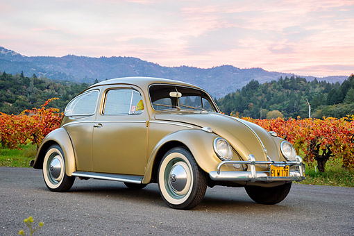 AUT 21 RK3776 01 © Kimball Stock 1956 Volkswagen Beetle Gold 3/4 Front View On Pavement By Vineyard By Mountains