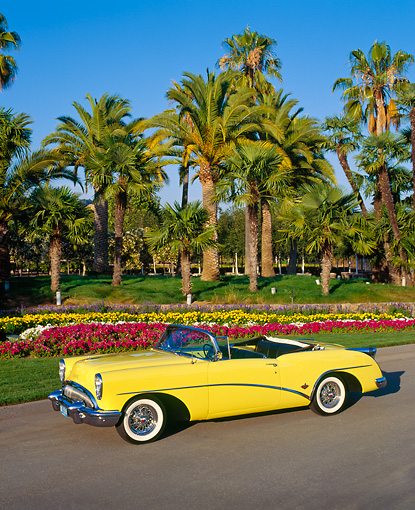 AUT 21 RK0662 02 © Kimball Stock 1954 Buick Skylark Model 100 Convertible Yellow Overhead Side 3/4 View On Pavement By Flowers And Palm Trees