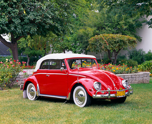 AUT 21 RK1427 03 © Kimball Stock 1956 VW Convertible Bug Red White Top 3/4 Side View On Grass By Flowers And Trees