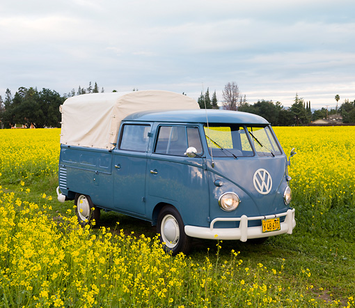AUT 21 RK2362 01 © Kimball Stock 1956 Volkswagen Binz Double Cab Bus Blue 3/4 Front View In Field Of Yellow Wildflowers